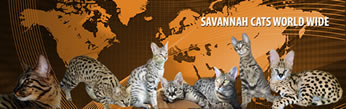 Savannah Cats World Wide